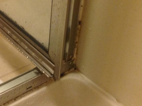 Embassy Suites by Hilton Buffalo: Shower Stall w/Black Mold2