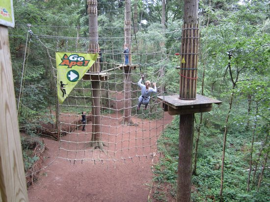 ‪Go Ape at Wyre Forest‬
