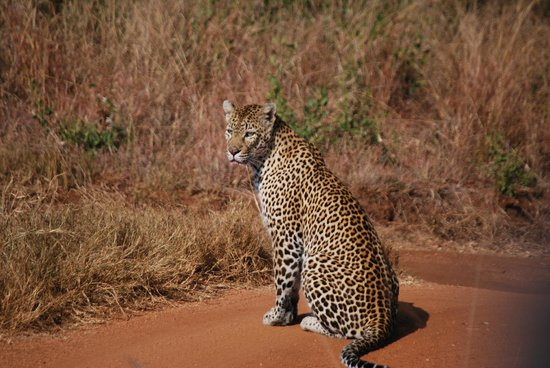 MalaMala Main Camp : Leopard sighting