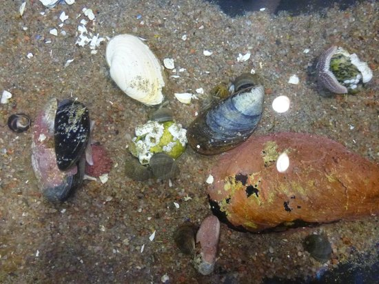 Bonne Bay Marine Station : Some of the sea life in the touch tank