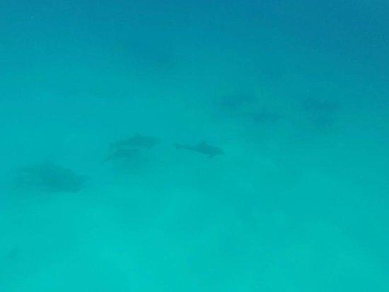 Squalo Adventures PADI Dive Resort #22312: Dolphins at Punta Sur (a rare sighting)