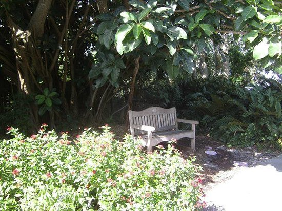 Marie Selby Botanical Gardens: Bench