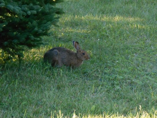 Cedar Dunes Provincial Park: The bunny who shared Pitch #3
