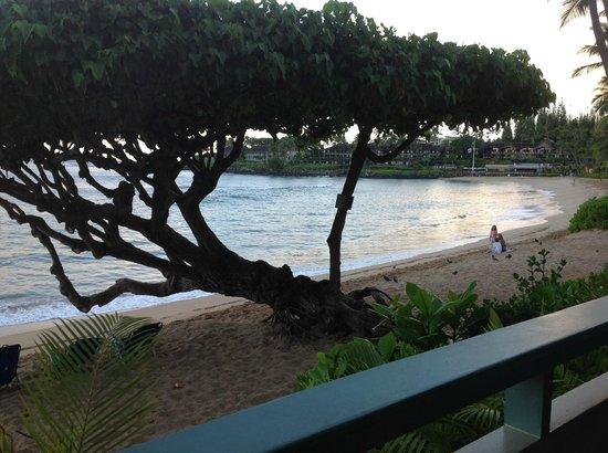 The Napili Bay 사진