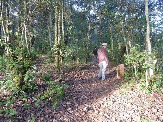 Huitepec Ecological Reserve: on the trails