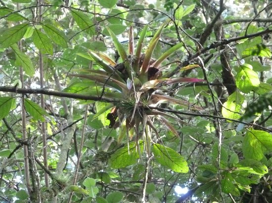 Huitepec Ecological Reserve: epiphytes