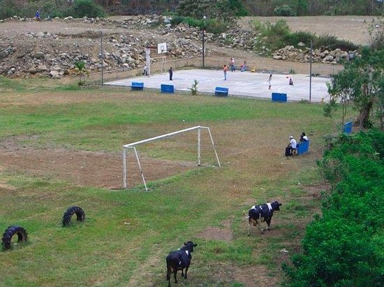Montana Linda Youth Hostel & Spanish School: Cows on Soccer Field in Orosi