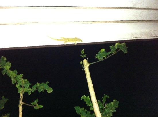 Gecko's Restaurant : Geckos