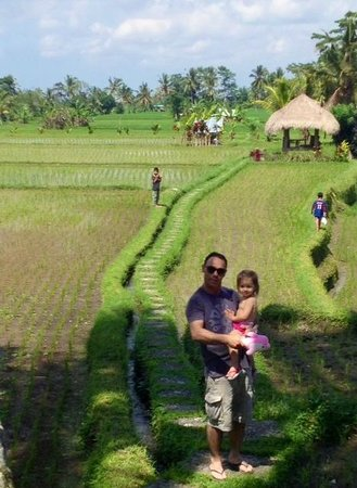 Mathis Retreat: rice paddy fields and view from pool and restaurant