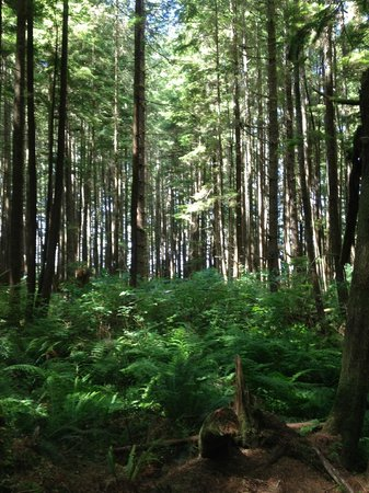 Rainforest Tours: rain forest