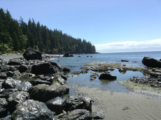 Rainforest Tours : mystic beach