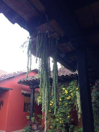 Guayaba Inn : Bella decoracion!