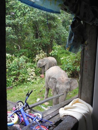 Osman's Homestay: More outside the window