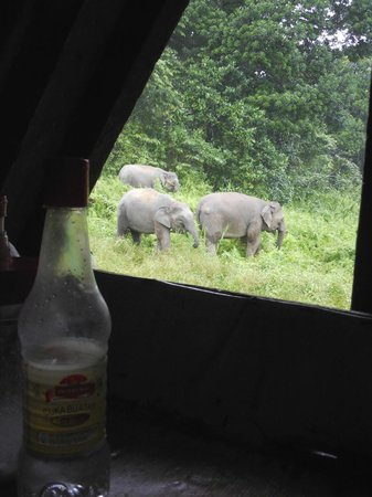 Osman's Homestay: Outside the kitchen window
