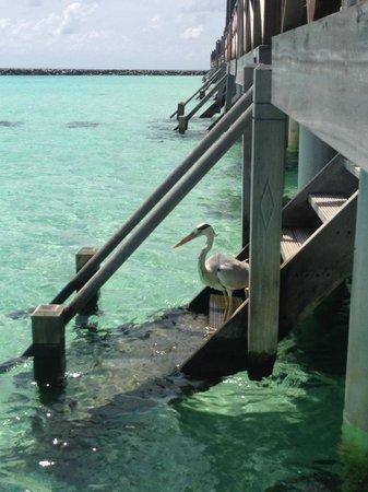 Vivanta by Taj Coral Reef Maldives: Overwater Villa