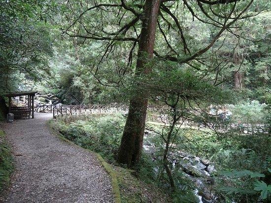 Lala Mountain Nature Reserve : 拉拉山神木區