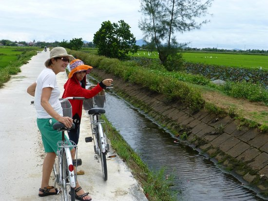 Coconut Tours: Though the ricefields