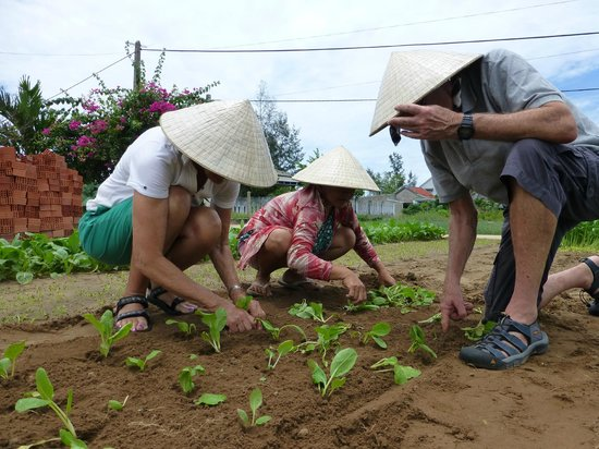Coconut Tours: Planting the morning glory