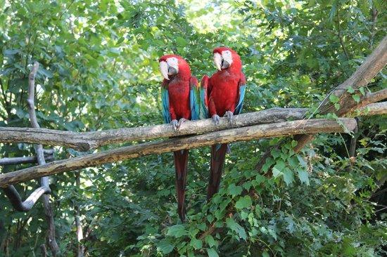 Agosto2013 Picture Of Giardino Zoologico Di Pistoia