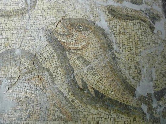 Alanya Archaeological Museum - Billede af Alanya Arkeoloji ...