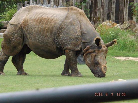 Rolling Hills Zoo: Indain Rino
