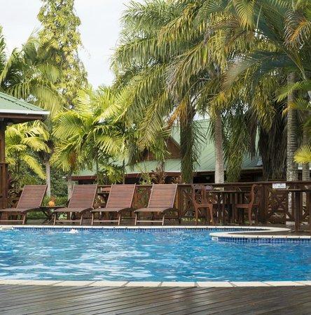 Le Jardin des Palmes: Pool JDP