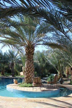 La Rose Du Desert : La piscine et ses palmiers