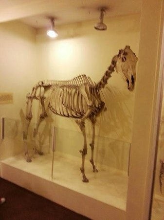 Image result for horse skeleton