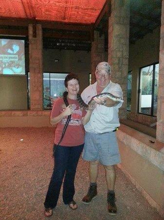 Zulu Croc: Brave guests