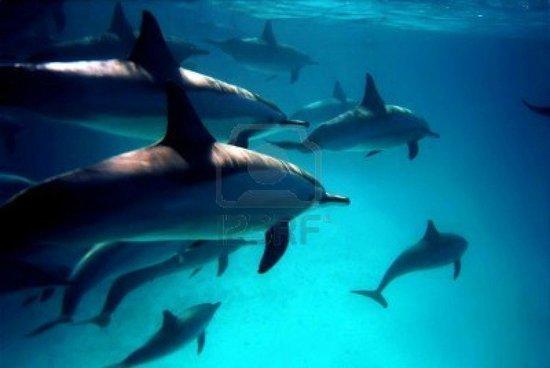 Emperor Divers Hurghada - Day Tours : Dolfijnen in de Rode zee bij Hurghada