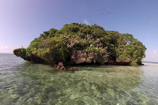 Toberua Island Resort: Bird Island sanctuary - birds and coral snakes