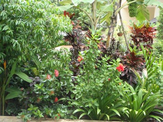 Mayfair Angkor Villa: beautiful garden