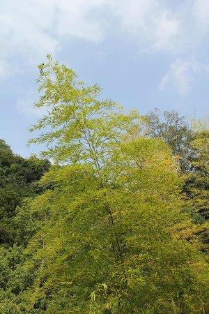 Arcana Izu: natural scenery
