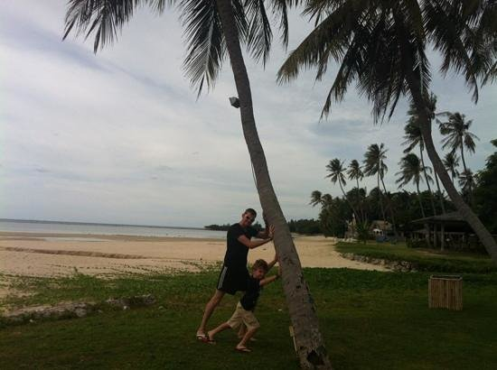 Shiva Samui: beautiful palm trees