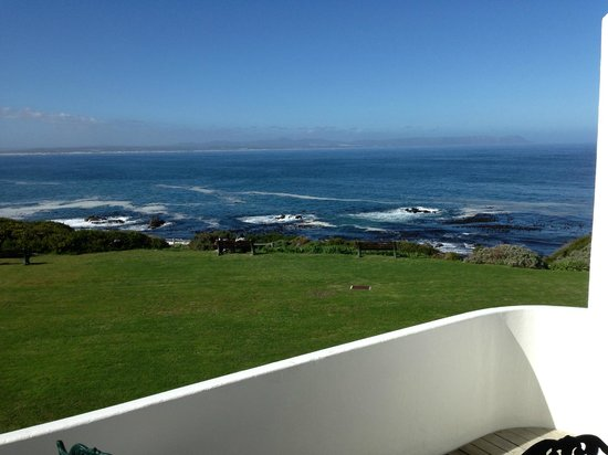 The Marine Hermanus: There are lots of whales and dolphins out there - somewhere