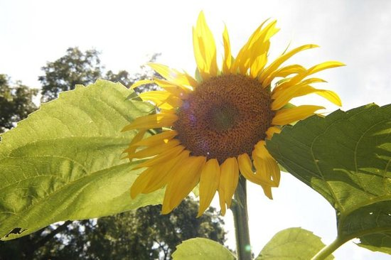 Rock Ford Plantation: A flower from the garden
