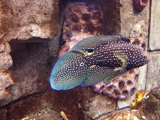 Dingle Oceanworld: Amazing Looking Fish