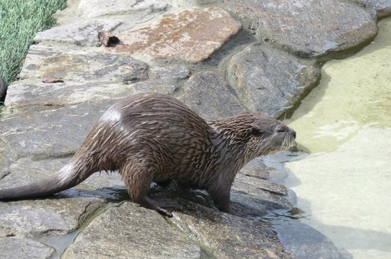 Five Sisters Zoo : Otter