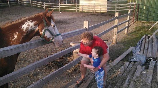Yogi Bear's Jellystone Park Camp-Resort at Beaver Trails: Petty farm