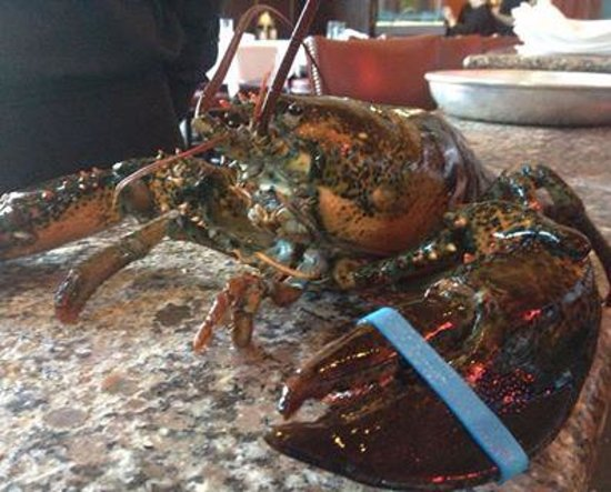 Hemenway's Seafood Grill & Oyster Bar: Maine Lobster