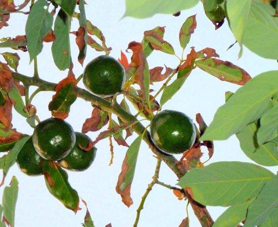 Ms Behavin Hibiscus Hybrid - Picture of Sanibel Moorings