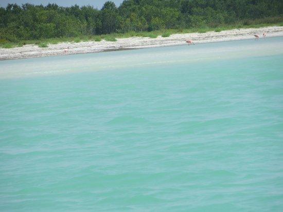 Underwater expeditions -  Tour Tiburon Ballena: Flamingos en playa desierta