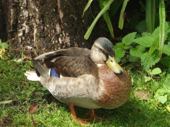WWT Martin Mere Wetland Centre: ducks