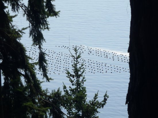 Oyster Bar on Chuckanut Drive: Oyster beds outside the window
