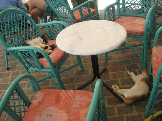 Pension Nora: Cretan cats/the coffee bar