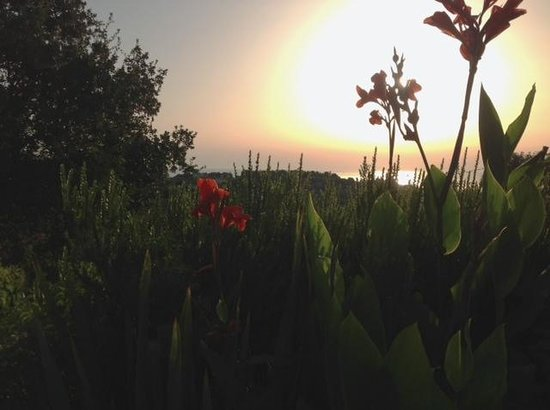 Vittoria House: Sunrise over the Adriatic - view from the lower terrace