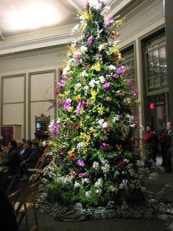 Daniel Stowe Botanical Garden: DSBG Holiday Orchid Tree