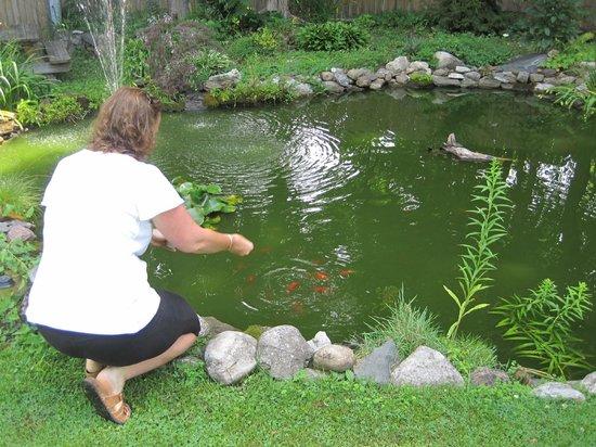 Mary's Meadow B&B: Feedish the goldfish