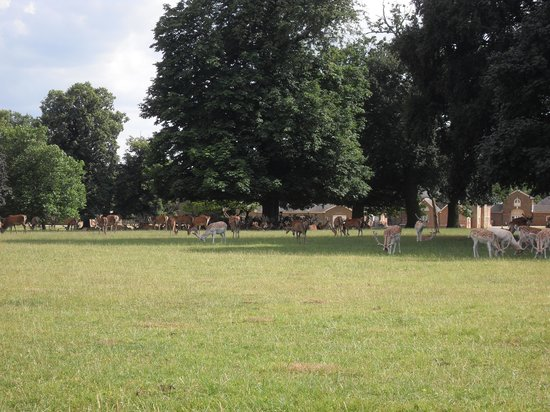Woburn Abbey and Gardens: The deer in the park.