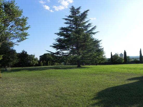 Relais Villa San Matteo: il parco